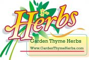 Garden Thyme Herbs - Herbal Enchantment