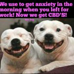 Dogs on CBD